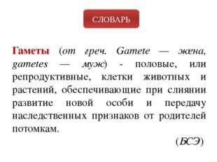 СЛОВАРЬ Гаметы (от греч. Gamete — жена, gametes — муж) - половые, или репроду