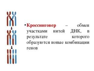 Кроссинговер – обмен участками нитей ДНК, в результате которого образуются но