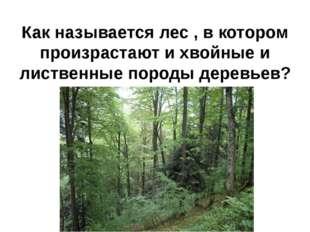 Как называется лес , в котором произрастают и хвойные и лиственные породы дер