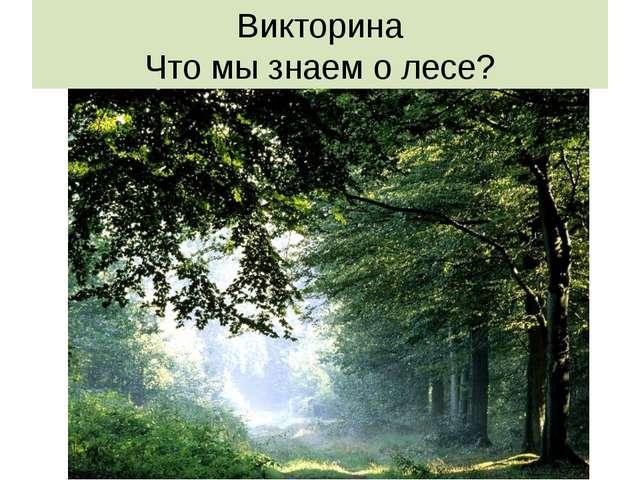 Викторина Что мы знаем о лесе?