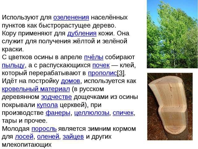 Используют для озеленения населённых пунктов как быстрорастущее дерево. Кору...