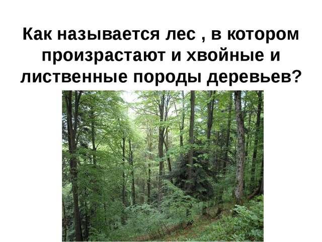 Как называется лес , в котором произрастают и хвойные и лиственные породы дер...