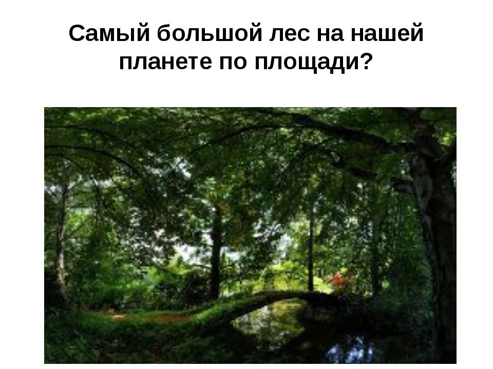 Cамый большой лес на нашей планете по площади?