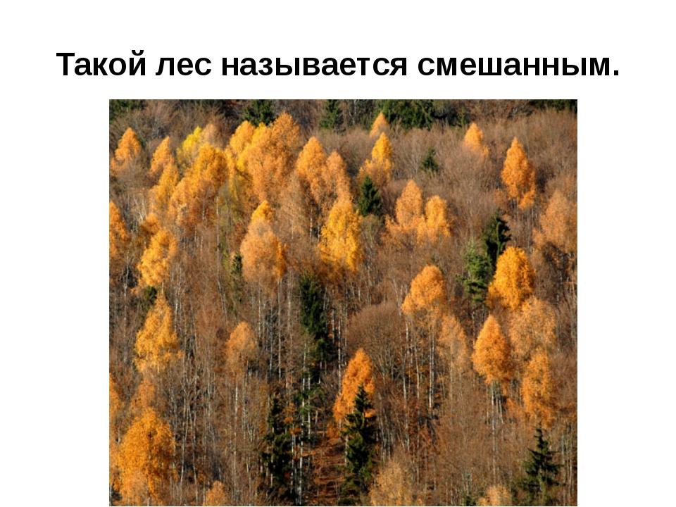 Такой лес называется смешанным.