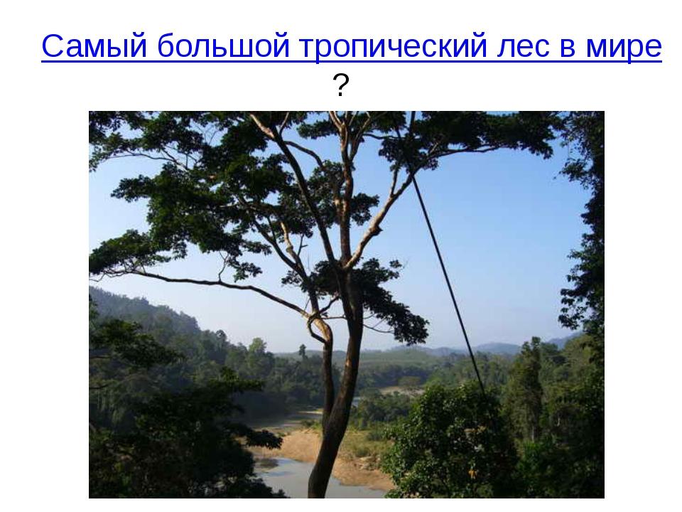 Самый большой тропический лес в мире?