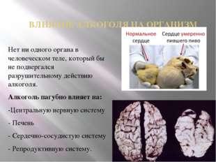 ВЛИЯНИЕ АЛКОГОЛЯ НА ОРГАНИЗМ Нет ни одного органа в человеческом теле, которы