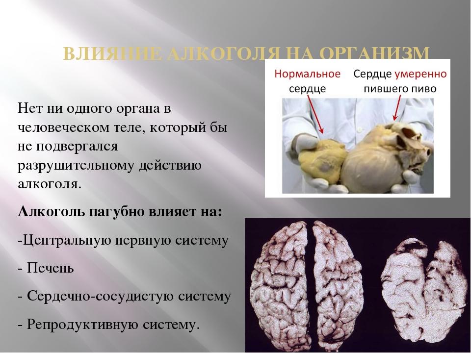 ВЛИЯНИЕ АЛКОГОЛЯ НА ОРГАНИЗМ Нет ни одного органа в человеческом теле, которы...