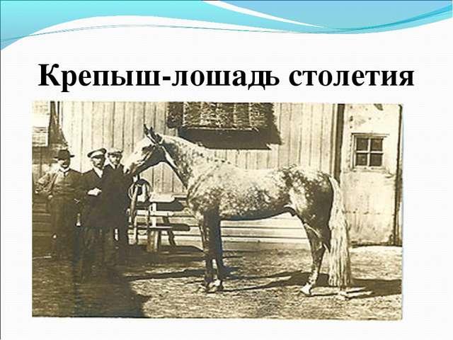 Крепыш-лошадь столетия