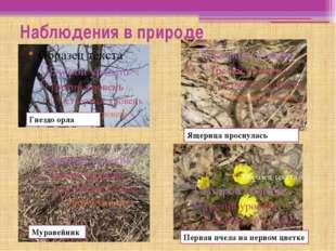 Наблюдения в природе Гнездо орла Муравейник Ящерица проснулась Первая пчела н