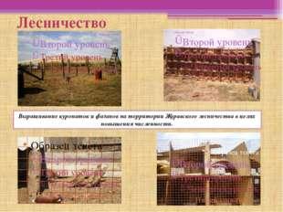 Лесничество Выращивание куропаток и фазанов на территории Журавского лесничес