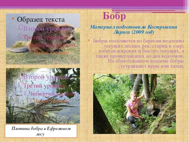 Бобр Материал подготовила Кострыкина Лариса (2009 год) Бобры поселяются по б...