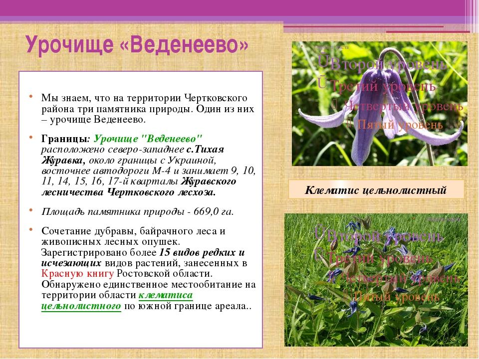 Урочище «Веденеево» Мы знаем, что на территории Чертковского района три памя...