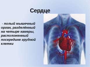 Сердце - полый мышечный орган, разделённый на четыре камеры, расположенный по