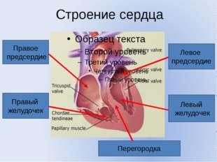 Строение сердца Правое предсердие Правый желудочек Левое предсердие Левый жел