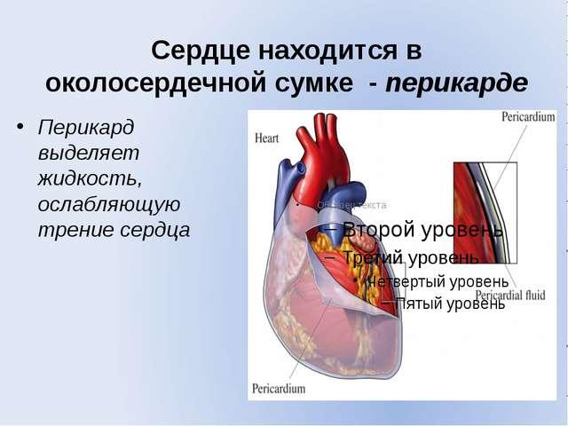 Сердце находится в околосердечной сумке - перикарде Перикард выделяет жидкост...