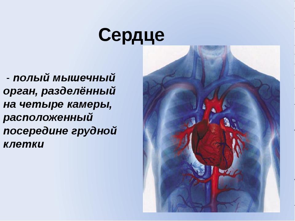Сердце - полый мышечный орган, разделённый на четыре камеры, расположенный по...