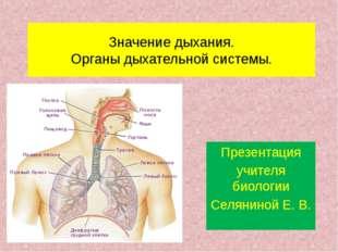 Значение дыхания. Органы дыхательной системы. Презентация учителя биологии Се