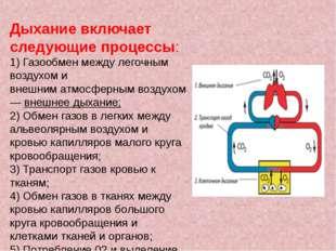 Дыхание включает следующие процессы: 1) Газообмен между легочным воздухом и в