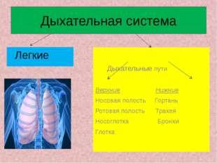 Дыхательная система Легкие Дыхательные пути Верхние Нижние Носовая полость Го