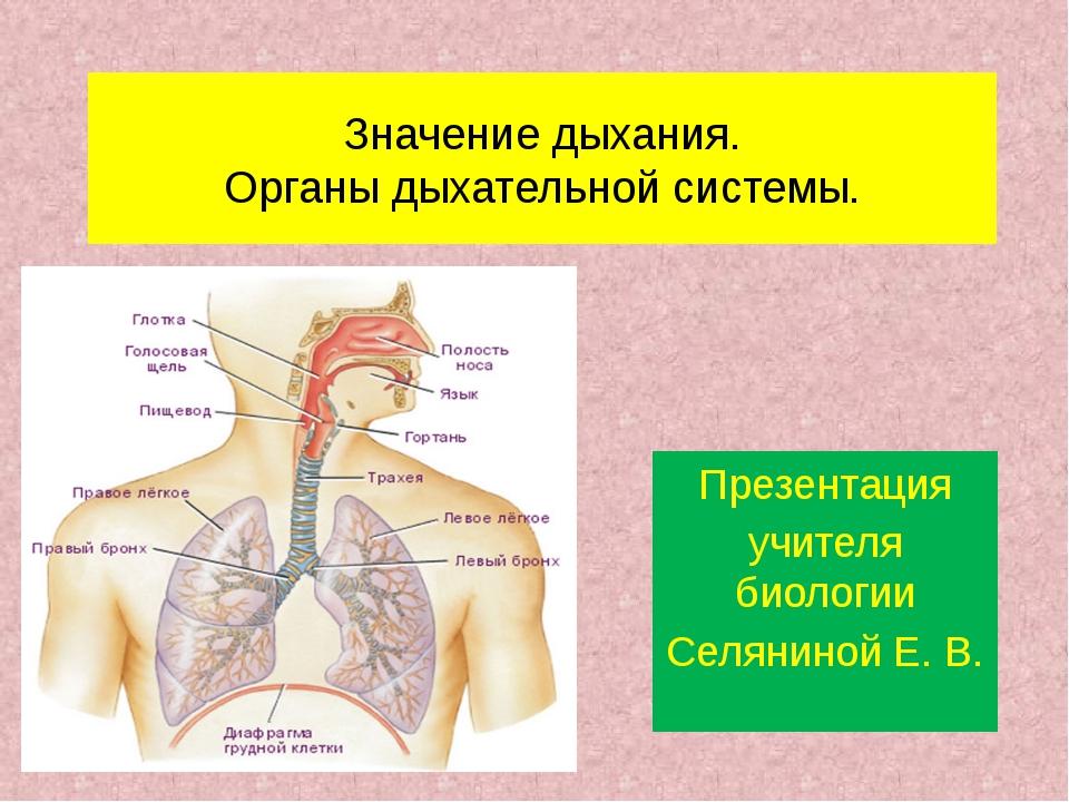 Значение дыхания. Органы дыхательной системы. Презентация учителя биологии Се...