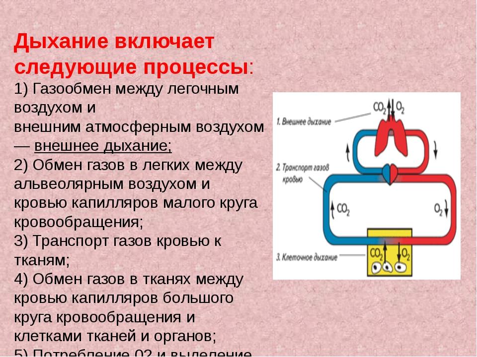 Дыхание включает следующие процессы: 1) Газообмен между легочным воздухом и в...