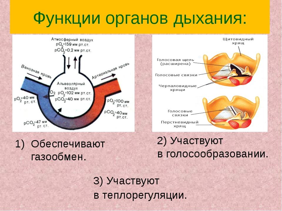 Функции органов дыхания: 2) Участвуют в голосообразовании. Обеспечивают газоо...