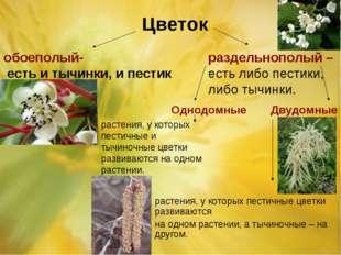 Цветок обоеполый- есть и тычинки, и пестик раздельнополый – есть либо пестики