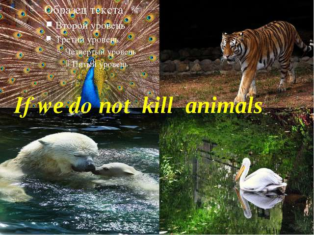 If we do not kill animals
