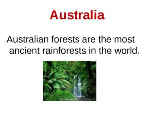Australia Australian forests are the most ancient rainforests in the world.
