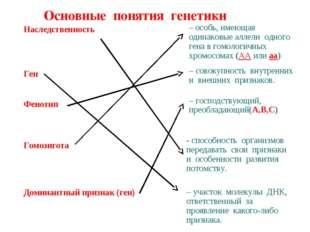 Основные понятия генетики Наследственность Ген Фенотип Гомозигота Доминантный