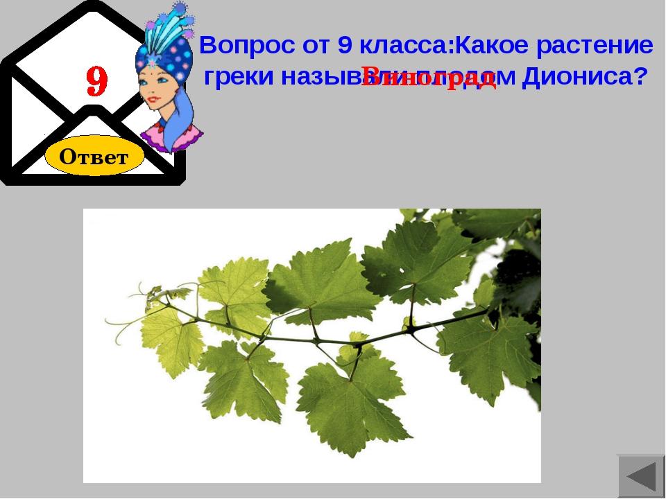 Ответ Вопрос от 9 класса:Какое растение греки называли плодом Диониса? Виноград