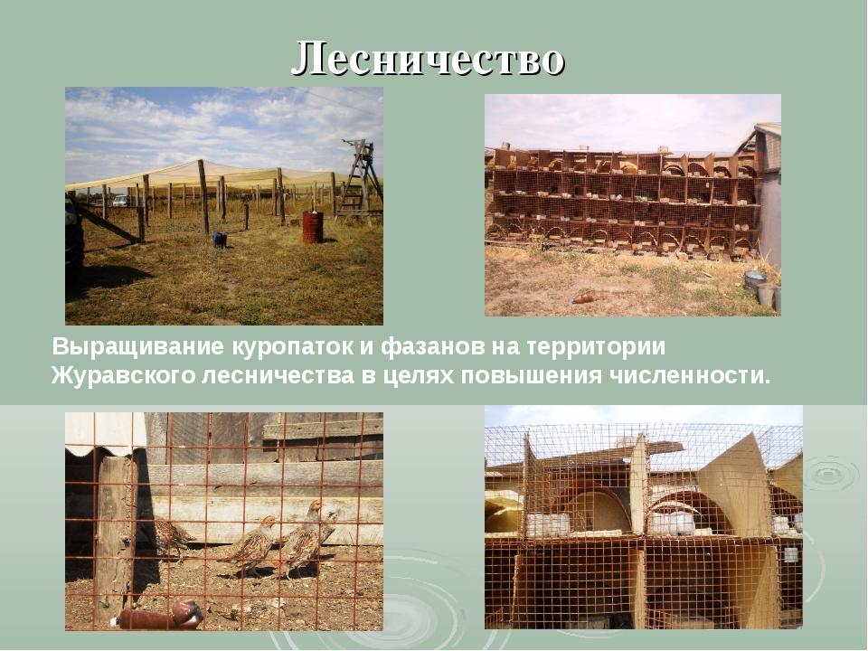 Лесничество Выращивание куропаток и фазанов на территории Журавского лесничес...