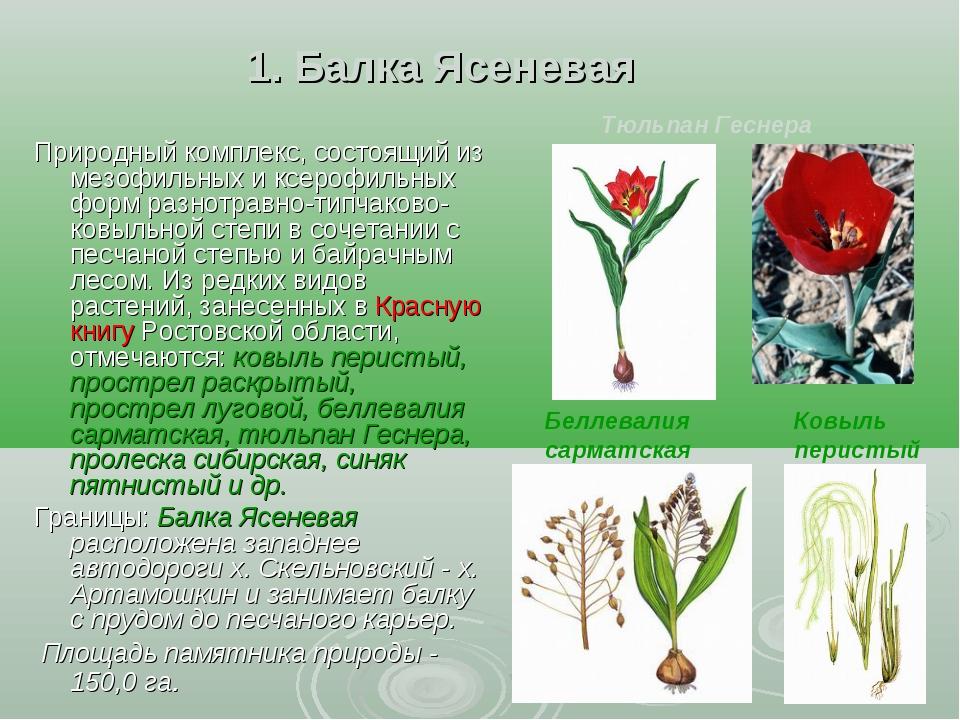 1. Балка Ясеневая Природный комплекс, состоящий из мезофильных и ксерофильны...