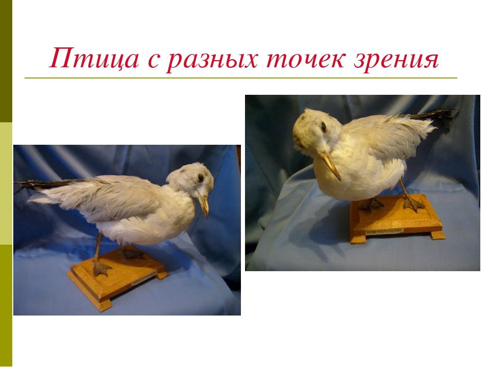Птица с разных точек зрения