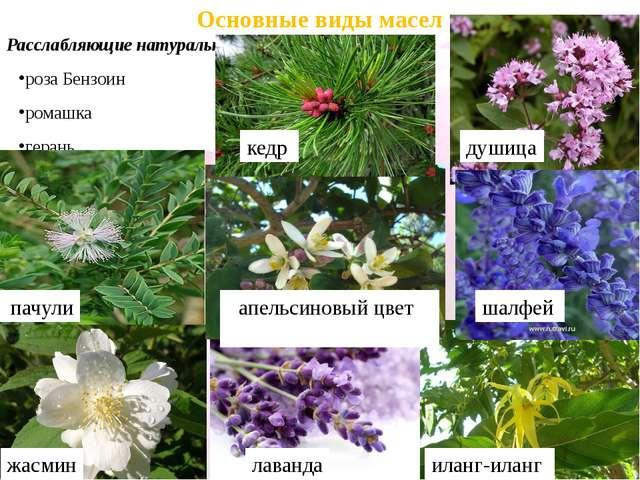 Основные виды масел Расслабляющие натуральные эфирные масла: роза Бензоин ром...