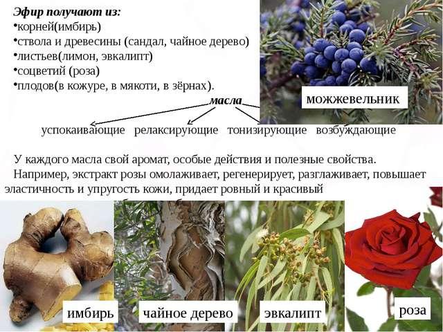 Эфир получают из: корней(имбирь) ствола и древесины (сандал, чайное дерево) л...