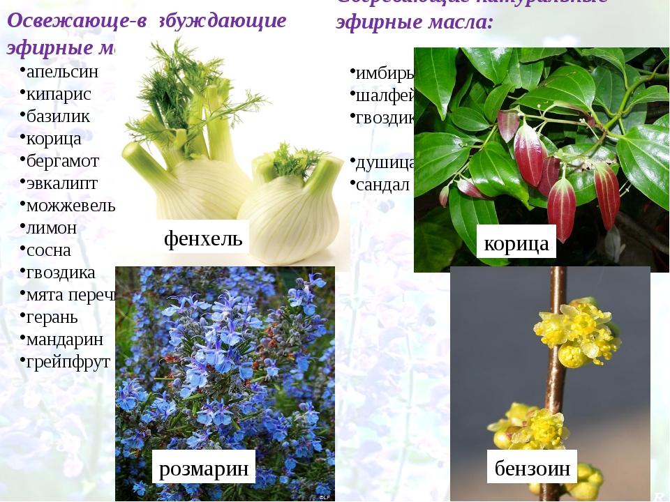 Согревающие натуральные эфирные масла: имбирь шалфей гвоздика душица сандал О...