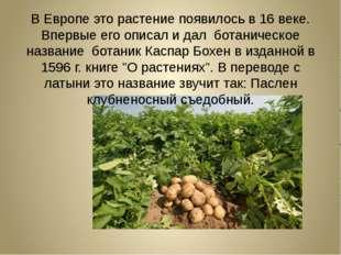 В Европе это растение появилось в 16 веке. Впервые его описал и дал ботаниче