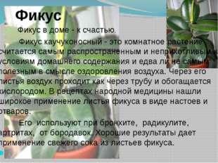 Фикус Фикус в доме - к счастью. Фикус каучуконосный - это комнатное растение