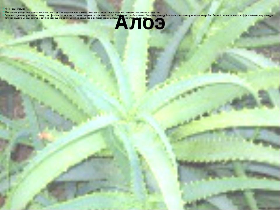 Алоэ  Алоэ - дар пустыни. Это - самое распространенное растение, растущее на...