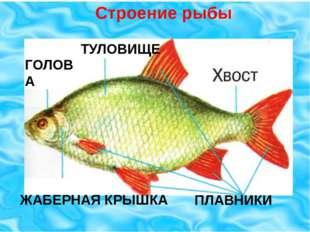 ПЛАВНИКИ ТУЛОВИЩЕ ГОЛОВА ЖАБЕРНАЯ КРЫШКА ПЛАВНИКИ Строение рыбы
