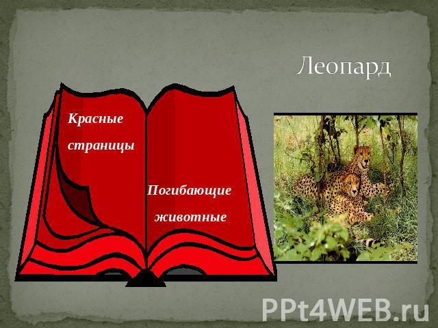 http://ppt4web.ru/images/150/12296/640/img11.jpg