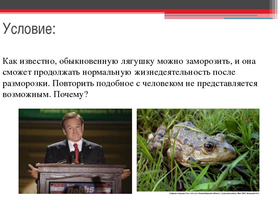 Условие: Как известно, обыкновенную лягушку можно заморозить, и она сможет пр...