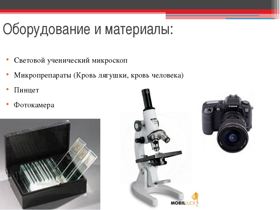 Оборудование и материалы: Световой ученический микроскоп Микропрепараты (Кров...