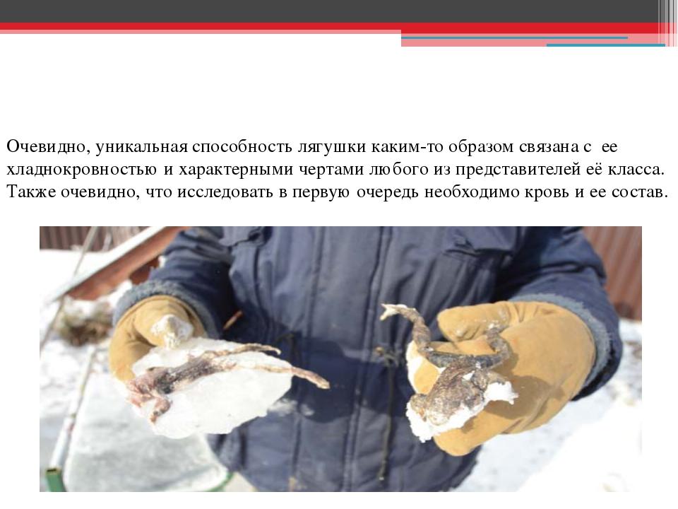 Очевидно, уникальная способность лягушки каким-то образом связана с ее хладн...