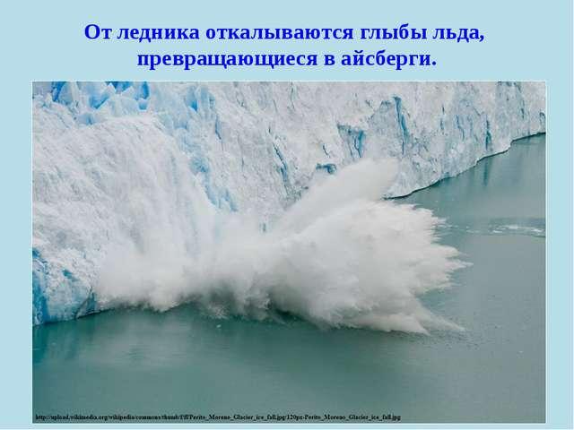 От ледника откалываются глыбы льда, превращающиеся в айсберги.