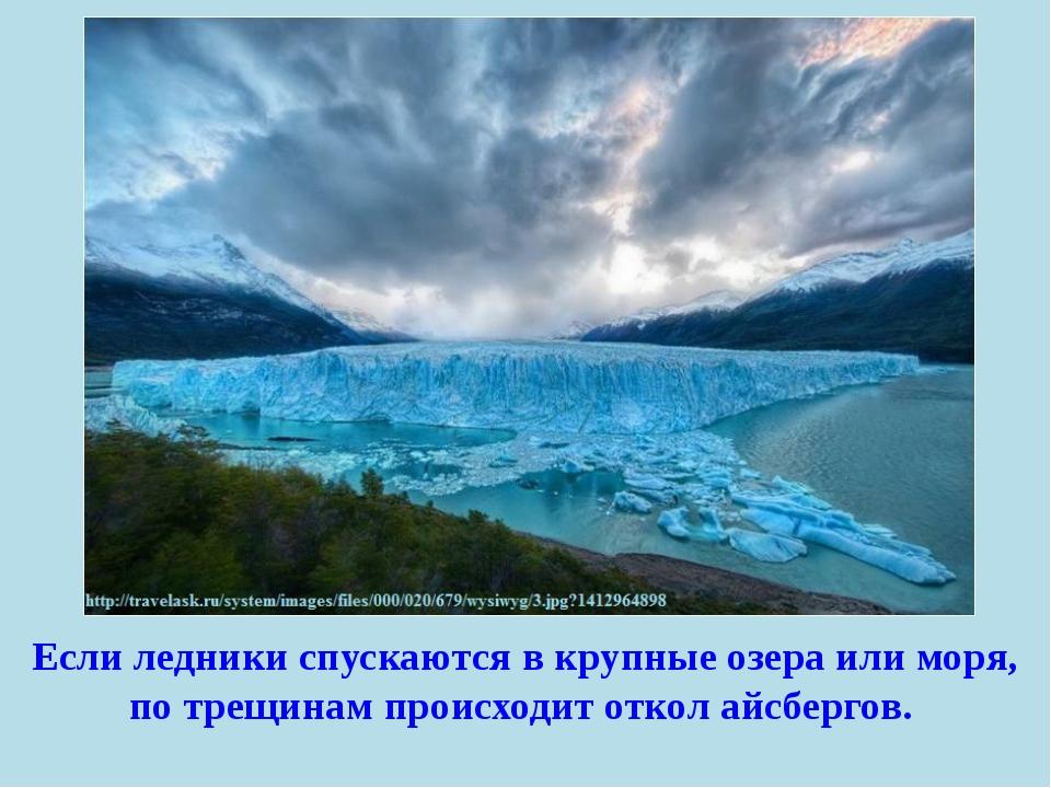 Если ледники спускаются в крупные озера или моря, по трещинам происходит отко...