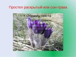 Простел раскрытый или сон-трава