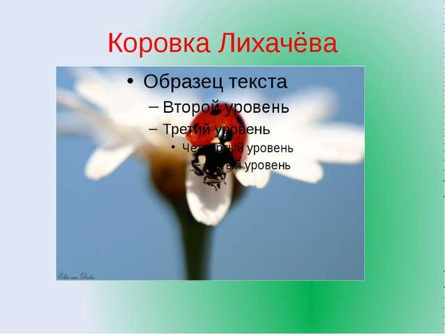 презентация на тему растительный и животный мир самарской области