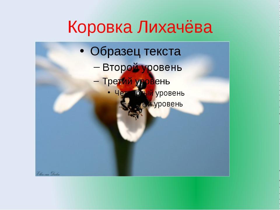 Коровка Лихачёва